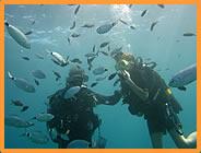 Résidence Perla Marina  Bravone  Corse : Location vacances à la mer pas