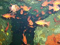 Plongée en Corse - Les grottes